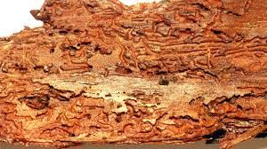 houtwormbestrijding weert
